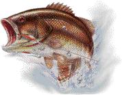 drawing of a jumping fish